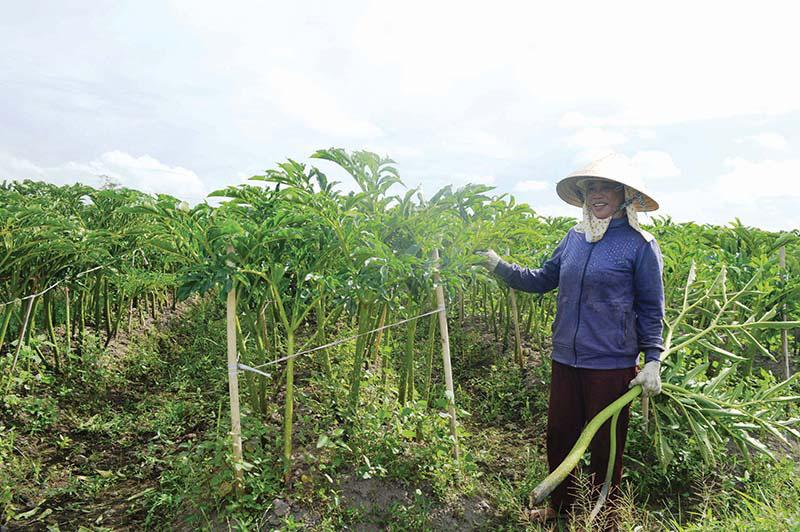 Quảng Trị: Lạ, nông dân khoái trồng loài cây nưa, trước là thức ăn cho nhà nghèo nay là của hiếm, ăn là nghiện - Ảnh 1.