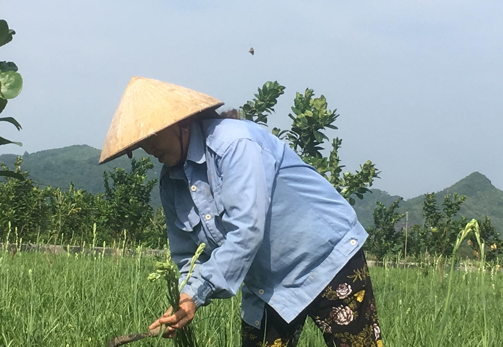 Trồng loài hoa chỉ nở về đêm, nông dân Thanh Hóa thu lời 100 triệu/ha/năm  - Ảnh 7.