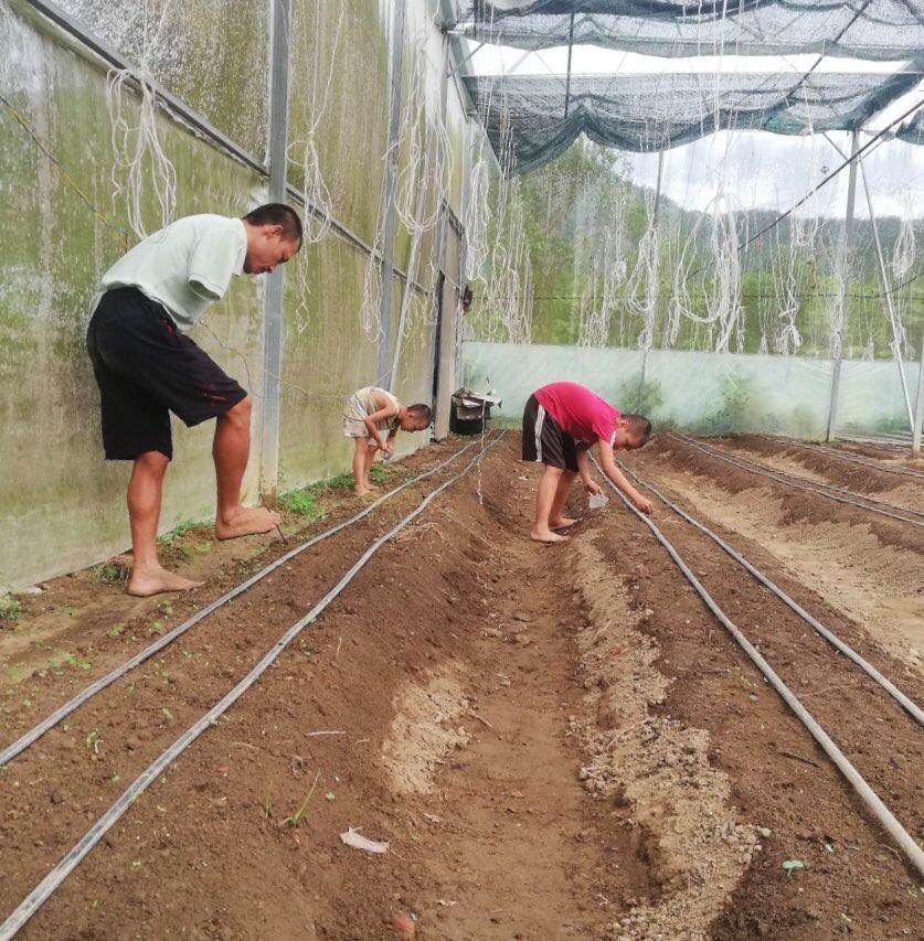 """Quảng Nam: Khuyết tật đôi tay, 8x """"đánh liều"""" thế chấp nhà đất làm nông nghiệp hữu cơ - Ảnh 2."""