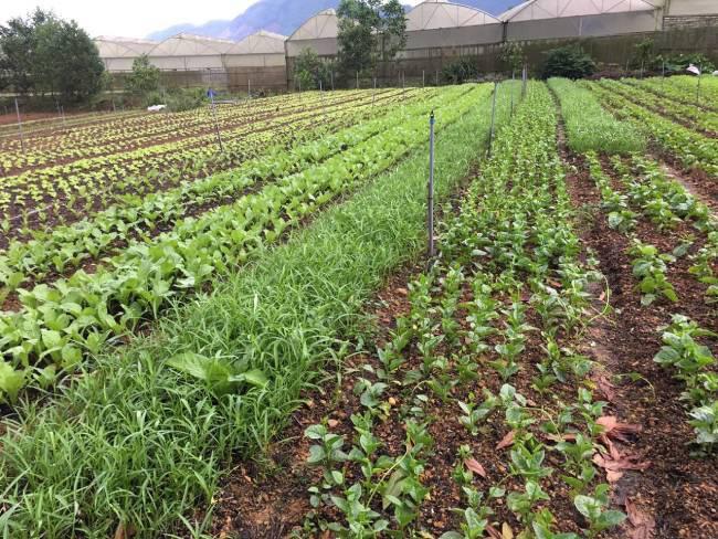 """Quảng Nam: Khuyết tật đôi tay, 8x """"đánh liều"""" thế chấp nhà đất làm nông nghiệp hữu cơ - Ảnh 7."""