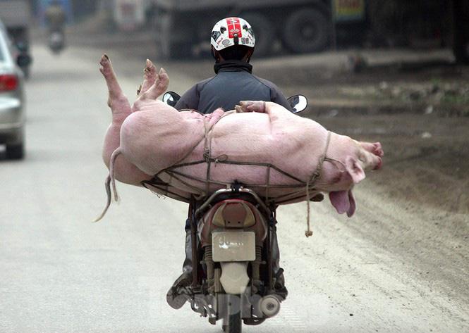 Vì sao giá lợn hơi giảm, thịt đến tay người tiêu dùng vẫn đắt? - Ảnh 1.