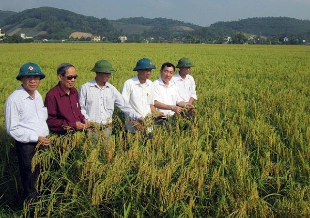 """Gạo nếp cái hoa vàng """"Gia Miêu Ngoại Trang"""" 1 trong 10 sản phẩm gạo nếp ngon nhất trong nước - Ảnh 2."""