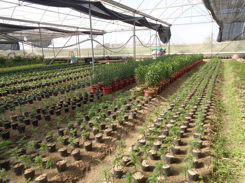 TP. Bắc Giang: Quy hoạch vùng sản xuất, nông dân tăng thu nhập - Ảnh 2.