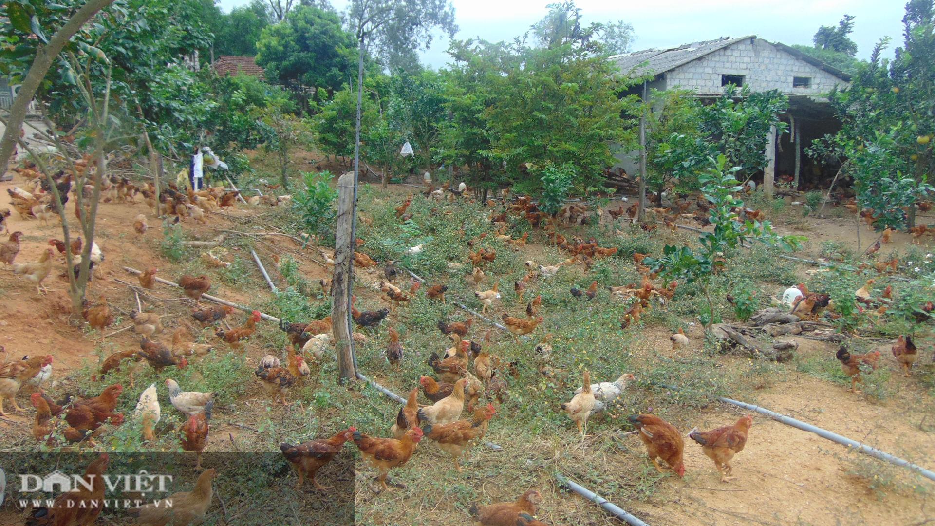 Thái Nguyên nông dân rủ nhau trồng giống bưởi quý có cây cho cả nghìn quả  - Ảnh 1.