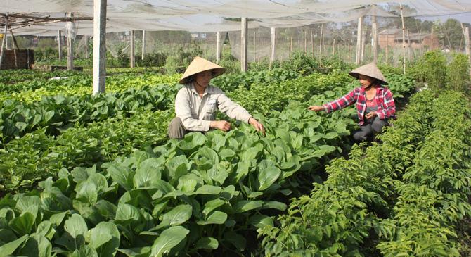 TP. Bắc Giang: Quy hoạch vùng sản xuất, nông dân tăng thu nhập - Ảnh 1.