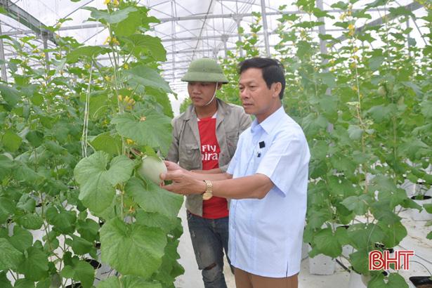 Hợp tác xã ở Hà Tĩnh thuê chuyên gia Israel dạy cách trồng dưa lưới - Ảnh 1.