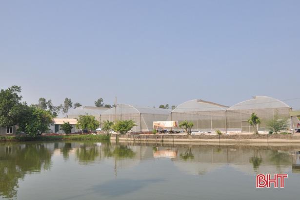Hợp tác xã ở Hà Tĩnh thuê chuyên gia Israel dạy cách trồng dưa lưới - Ảnh 2.