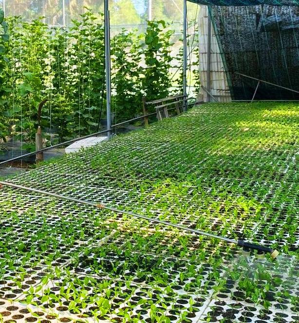 Trồng dưa lưới sạch, chủ vườn không tốn công thụ phấn hoa… tất cả nhờ vào đàn ong - Ảnh 4.