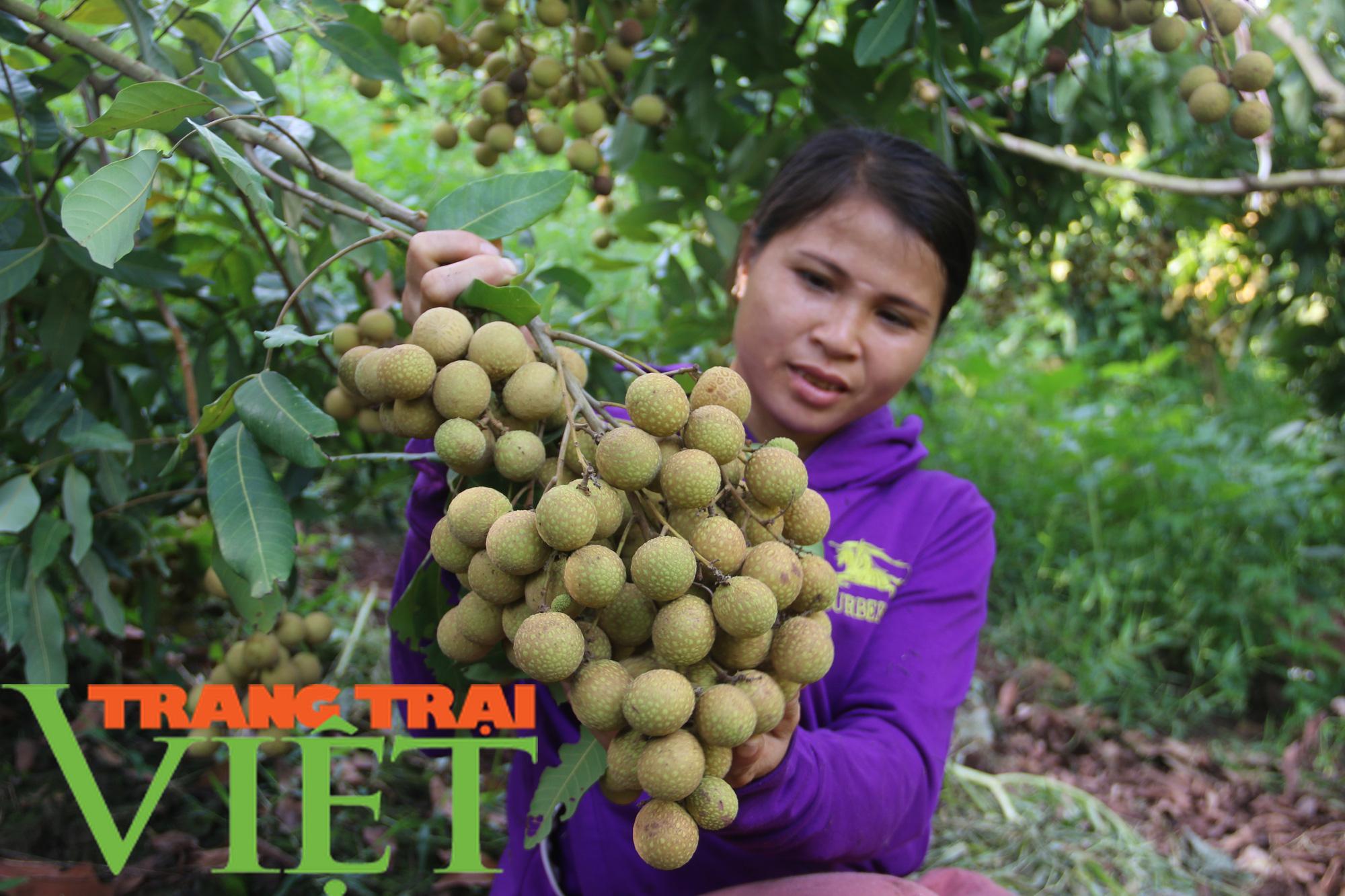 Thứ Trưởng NNPTN: Sơn La là một điển hình về trồng cây ăn quả - Ảnh 3.