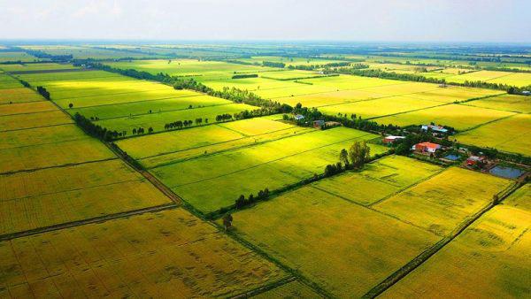 Xác định người trực tiếp sản xuất nông nghiệp để cấp Sổ đỏ - Ảnh 1.
