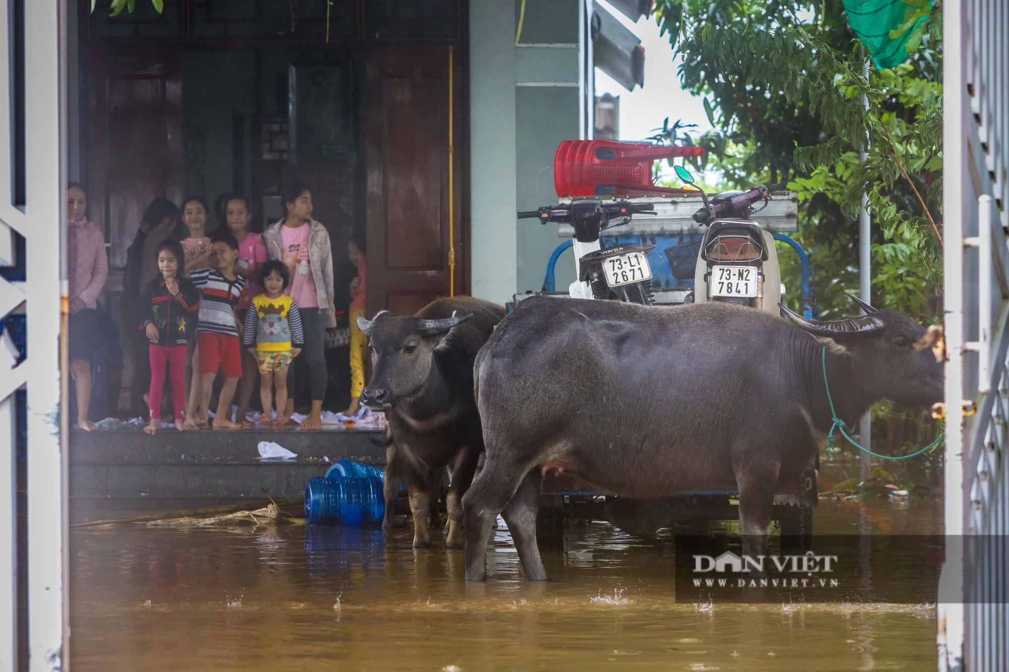 Cảnh vật vã sinh tồn mùa mưa lũ của người dân huyện Lệ Thủy - Ảnh 9.