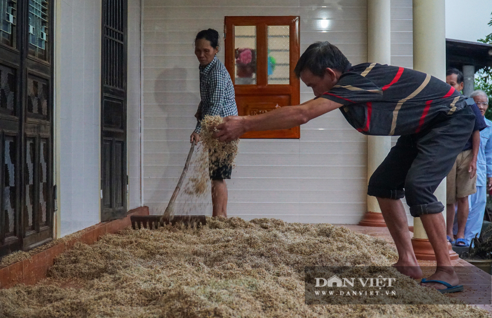 Người dân Quảng trị khóc ròng vì lúa mọc mầm, nhà cửa tan hoang sau lũ - Ảnh 2.