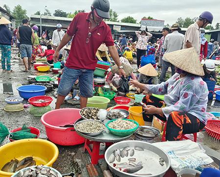 Hậu Giang: Mưa nhiều, cá đồng dồi dào, giá bán cá đồng giảm - Ảnh 1.