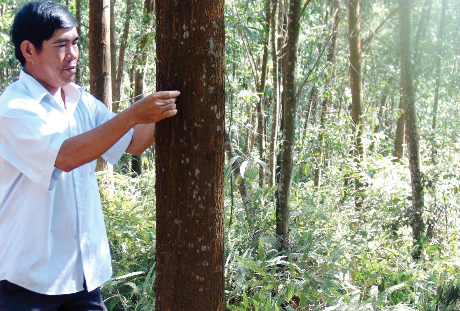 Tổng Cục trưởng Tổng cục Lâm nghiệp: Lũ lụt ở miền Trung do biến đổi khí hậu, không phải do phá rừng - Ảnh 2.