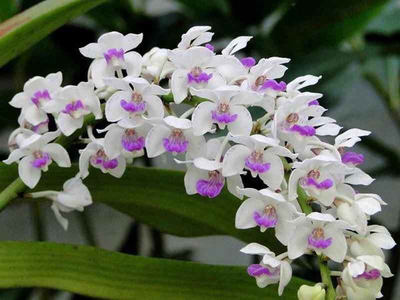 Gia chủ muốn phát tài, phát lộc nên đặt loài hoa phong thủy này trên bàn  - Ảnh 1.