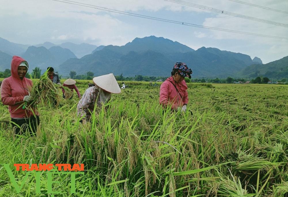 Lợi ích kép khi sản xuất lúa theo hướng hữu cơ gắn với BVMT - Ảnh 1.