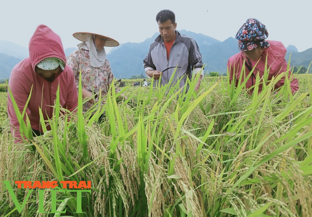 Lợi ích kép khi sản xuất lúa theo hướng hữu cơ gắn với BVMT - Ảnh 2.