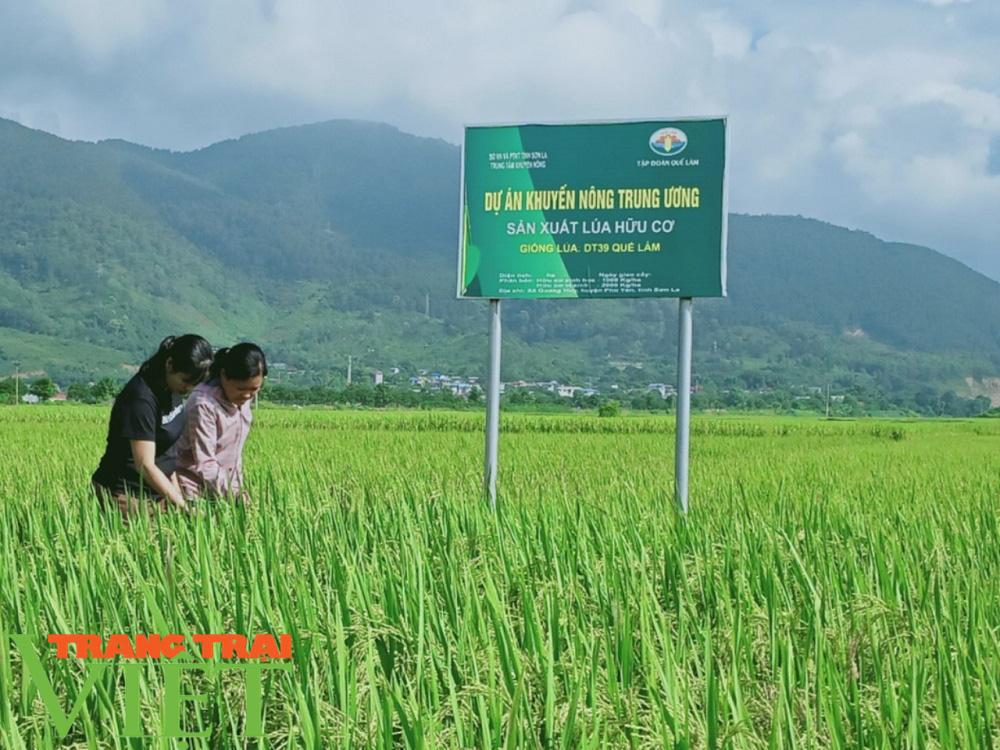 Lợi ích kép khi sản xuất lúa theo hướng hữu cơ gắn với BVMT - Ảnh 3.