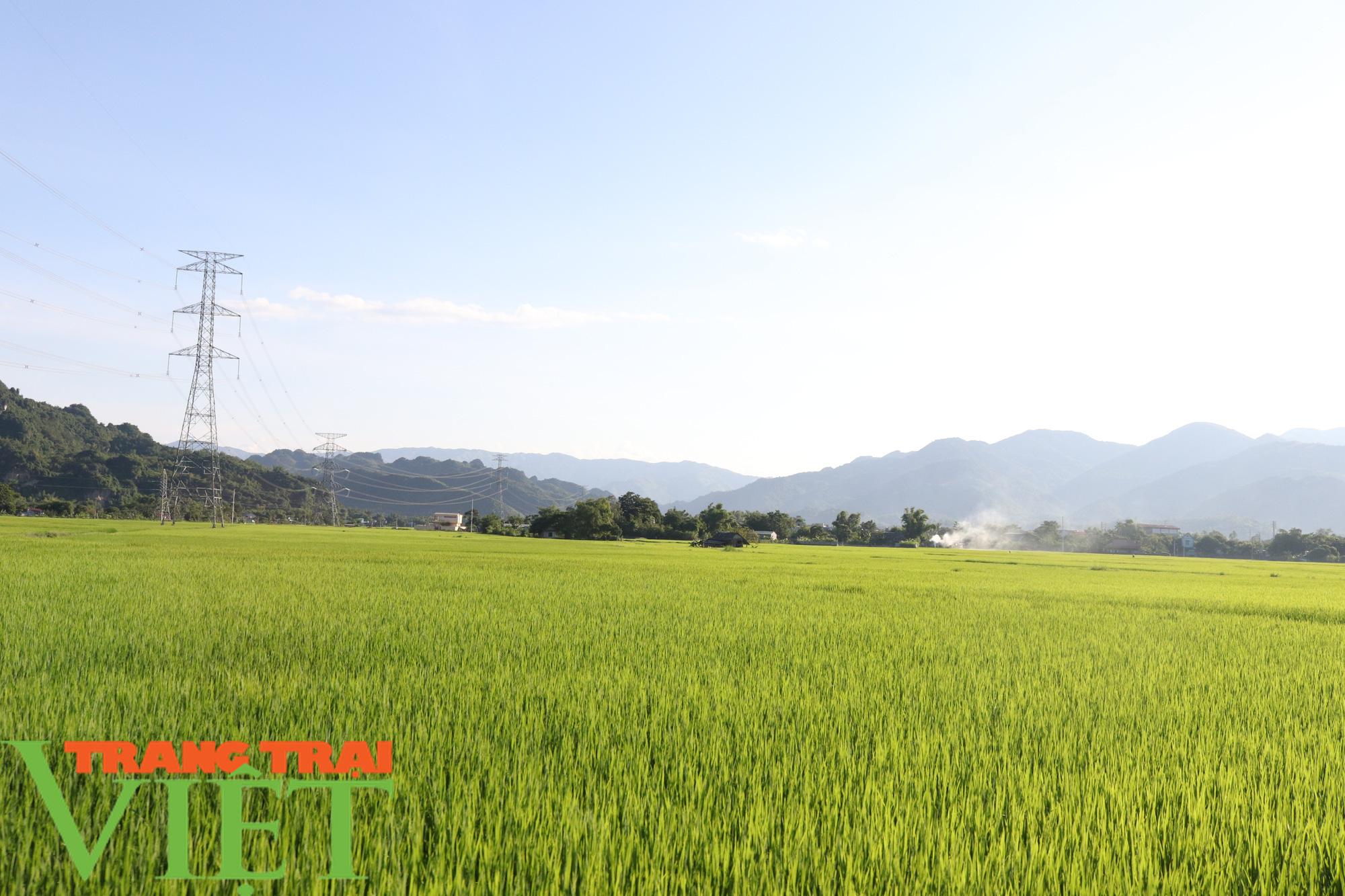 Lợi ích kép khi sản xuất lúa theo hướng hữu cơ gắn với BVMT - Ảnh 5.
