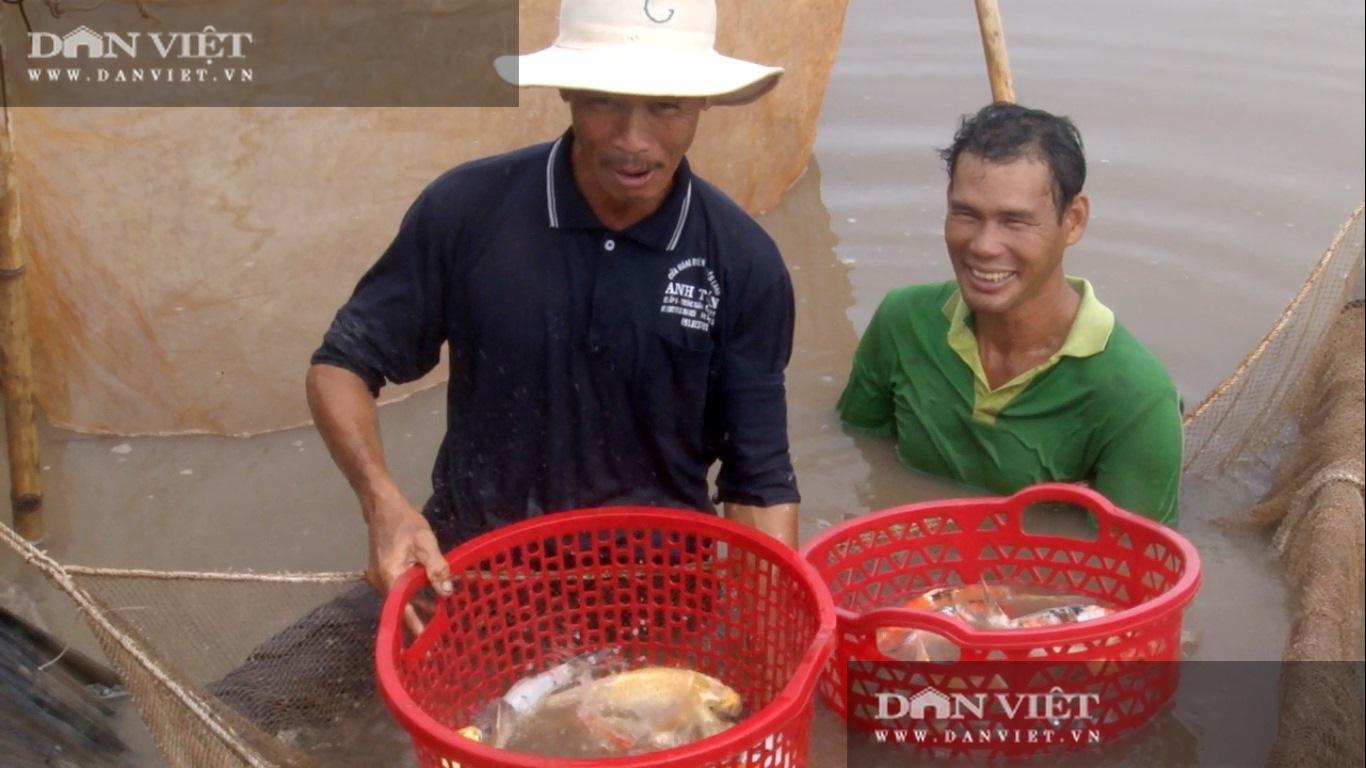"""Lão nông vùng lũ chăm cá """"khủng"""" bán mỗi con tiền triệu - Ảnh 1."""