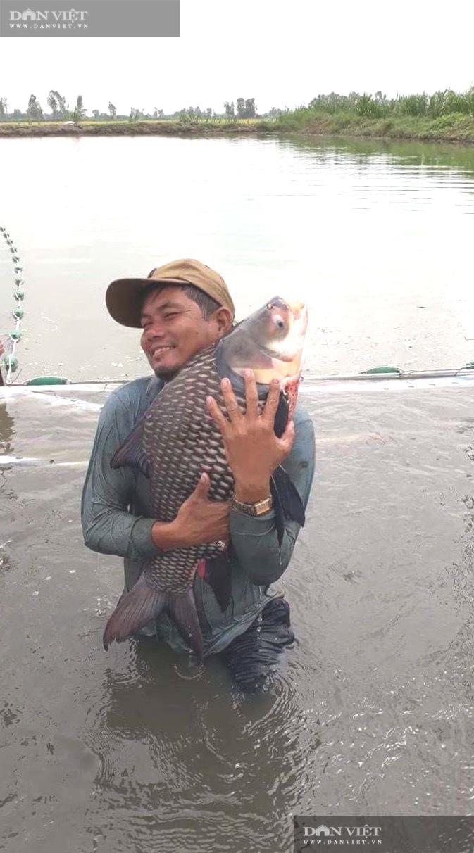 """Lão nông vùng lũ chăm cá """"khủng"""" bán mỗi con tiền triệu - Ảnh 4."""
