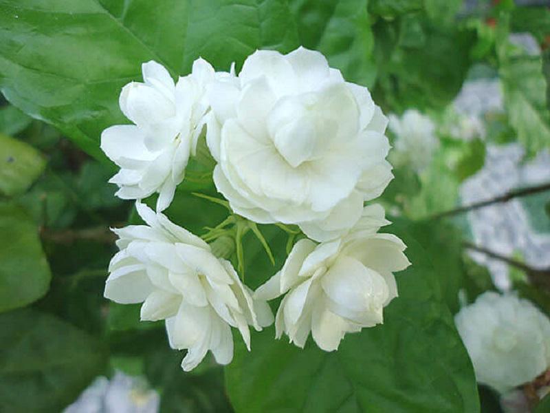Gia chủ muốn phát tài, phát lộc nên đặt loài hoa phong thủy này trên bàn  - Ảnh 3.