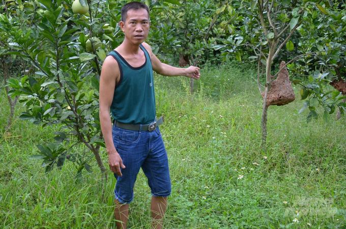Bắc Giang: Ở đây có một nghề mới nghe nhiều người đã khiếp, nuôi ong kịch độc để lấy… thịt - Ảnh 6.