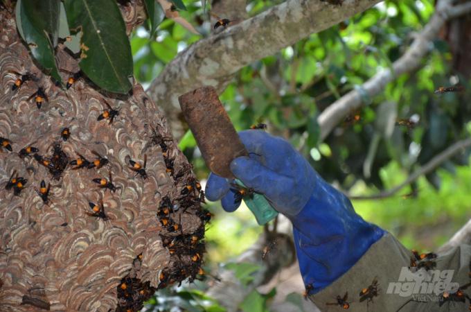 Bắc Giang: Ở đây có một nghề mới nghe nhiều người đã khiếp, nuôi ong kịch độc để lấy… thịt - Ảnh 2.