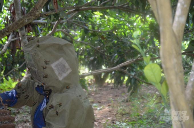 Bắc Giang: Ở đây có một nghề mới nghe nhiều người đã khiếp, nuôi ong kịch độc để lấy… thịt - Ảnh 3.