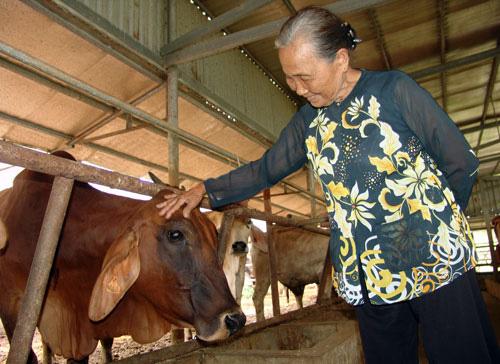 Long An: Cụ bà U80 mở trang trại nuôi bò lực sĩ kiếm việc cho thanh niên  - Ảnh 1.