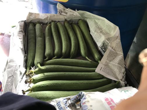 Một ông nông dân tỉnh Hậu Giang khá giả nhờ trồng mướp, hái trái nào công ty mua hết trái đó - Ảnh 2.