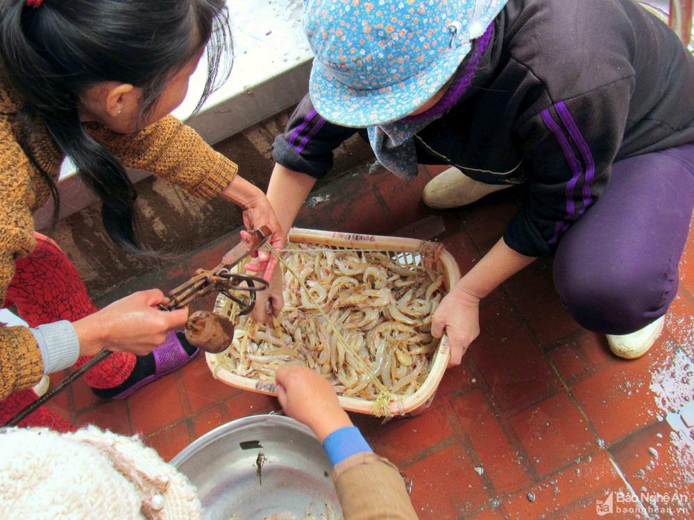 Đặc sản tôm nõn Nghệ An tăng giá kỷ lục - Ảnh 1.