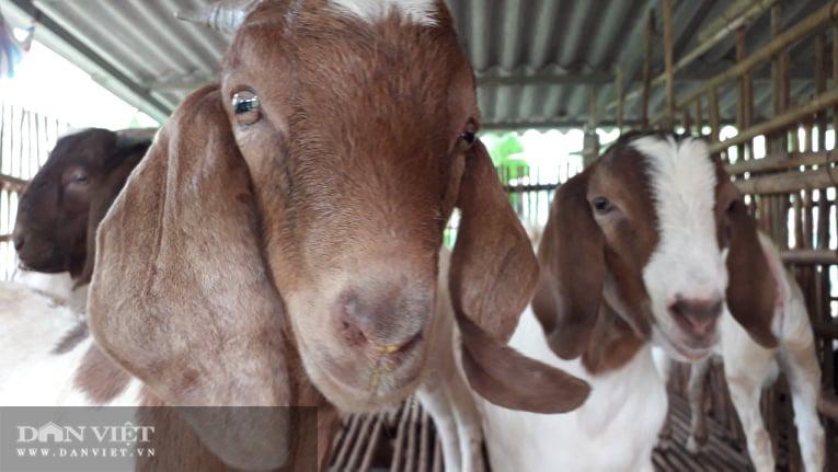 Thái Nguyên: Nuôi con tai dài tới mõm, vợ chồng lão nông kiếm trăm triệu đồng mỗi năm - Ảnh 2.