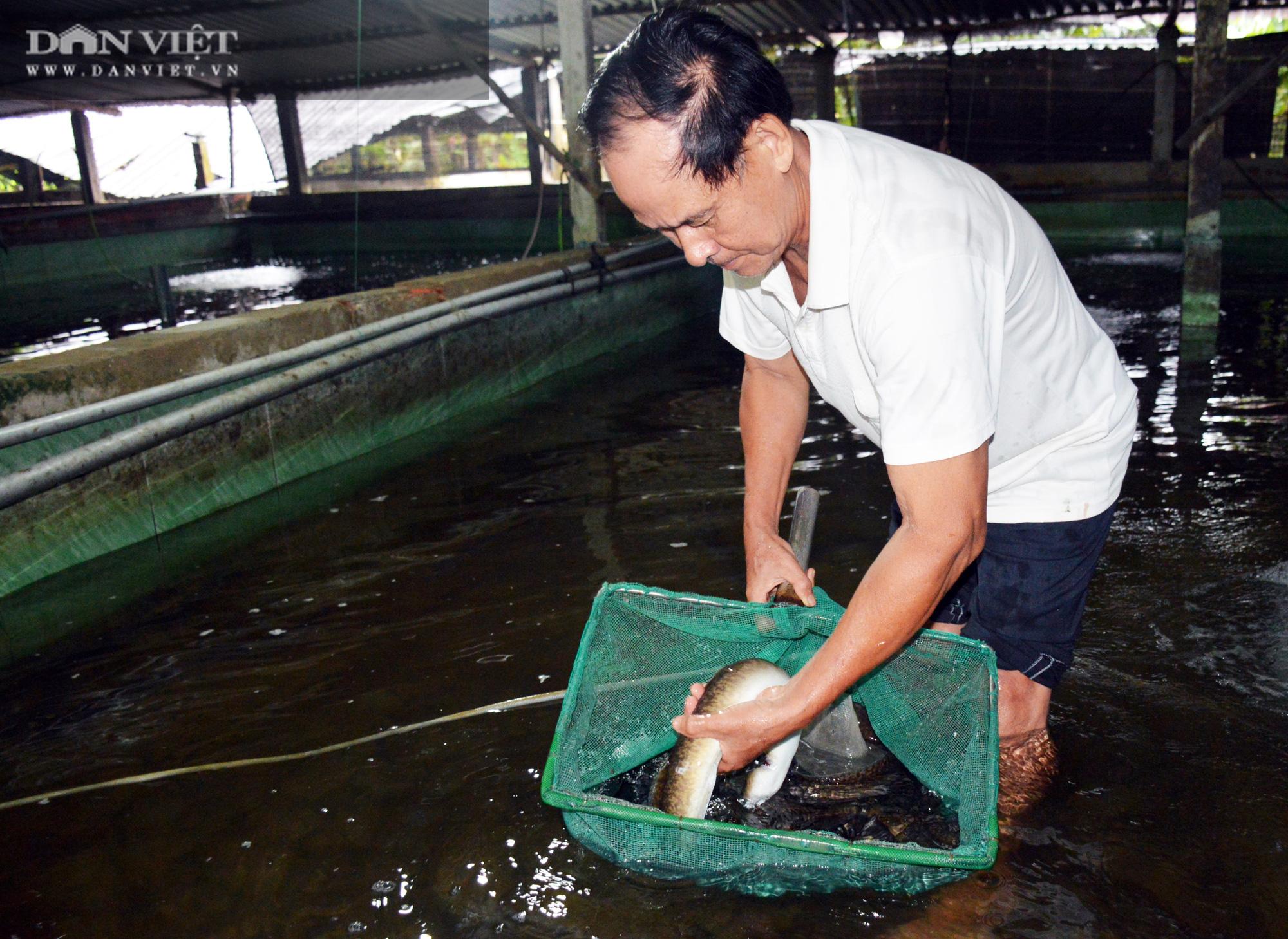 """Nguyên Bí thư huyện trót """"mê"""" con cá chình, nuôi cả đàn cá dày đặt trên bể xi măng - Ảnh 2."""