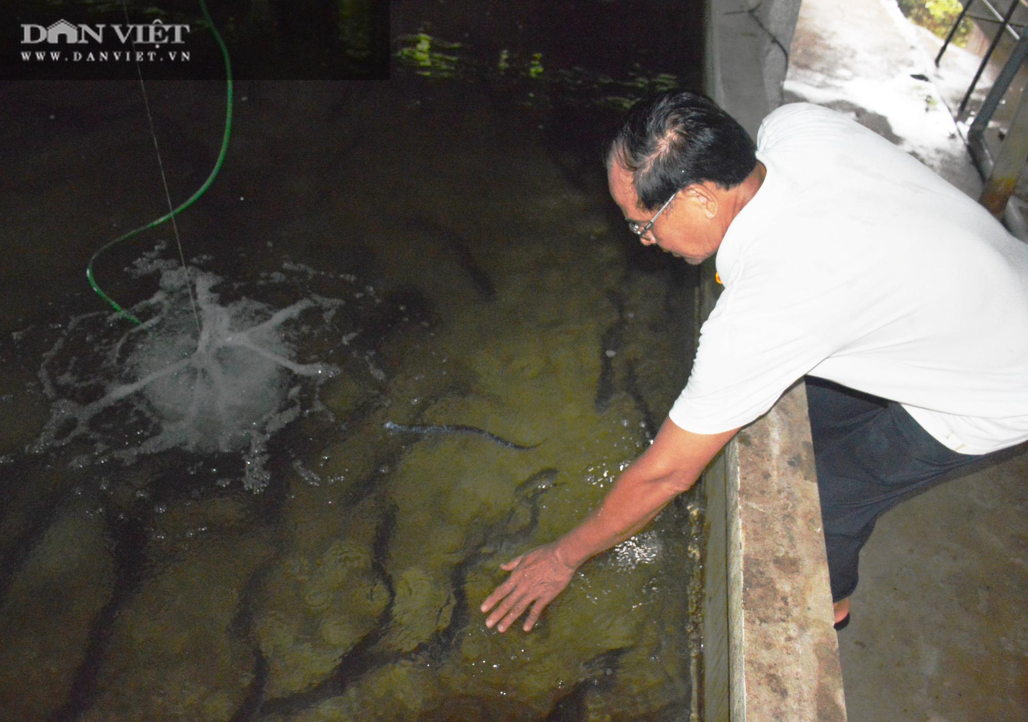 """Nguyên Bí thư huyện trót """"mê"""" con cá chình, nuôi cả đàn cá dày đặt trên bể xi măng - Ảnh 5."""
