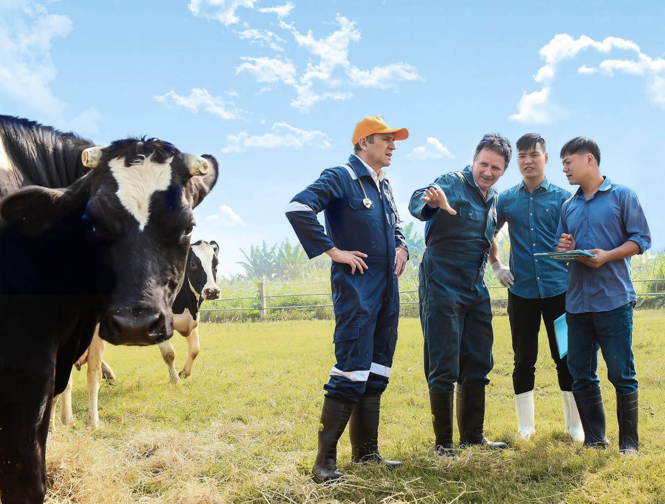 Cô Gái Hà Lan và hành trình kiến tạo giá trị cho ngành chăn nuôi bò sữa bền vững - Ảnh 3.