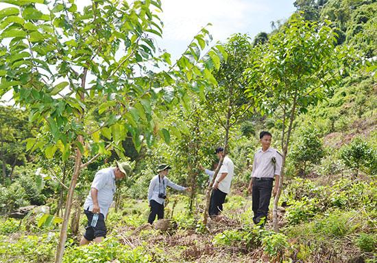 WB sẽ thanh toán hơn 1.200 tỷ đồng cho Việt Nam để giữ rừng, giảm phát thải khí nhà kính tại 6 tỉnh miền Trung - Ảnh 2.
