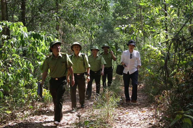 WB sẽ thanh toán hơn 1.200 tỷ đồng cho Việt Nam để giữ rừng, giảm phát thải khí nhà kính tại 6 tỉnh miền Trung - Ảnh 1.