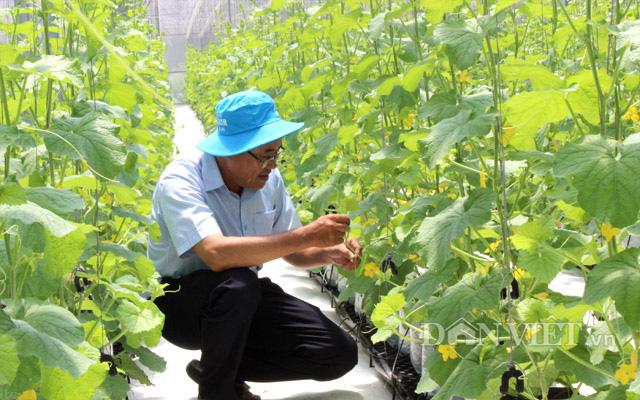 Bán dưa lưới lời 1 tỷ đồng thì bán hạt giống dưa lưới có thể lời 5 tỷ đồng - Ảnh 2.