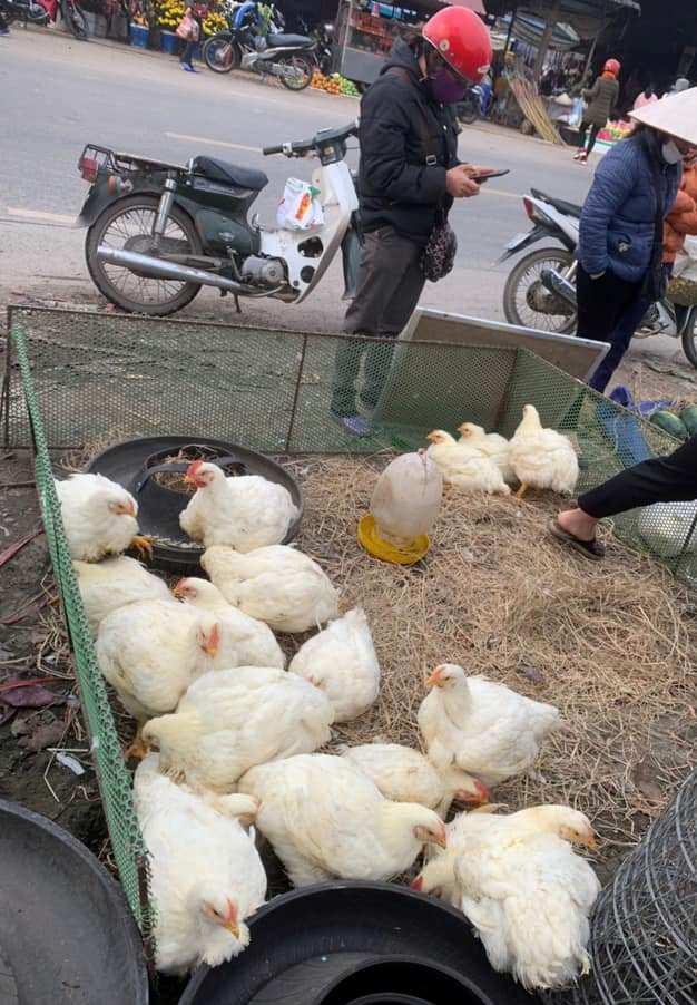 Giá gia cầm hôm nay 24/10: Giá gà, vịt bấp bênh nhưng người nuôi vịt ở đây vẫn kiếm tiền tỷ/năm - Ảnh 3.