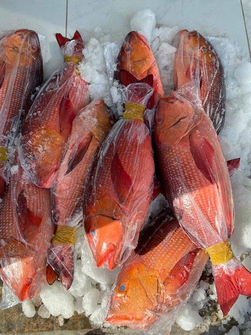 Vì sao cá hồng chuối là loài cá đắt tiền nhưng ở tỉnh Bình Thuận vẫn có nhiều vụ ăn cá này bị ngộ độc? - Ảnh 1.