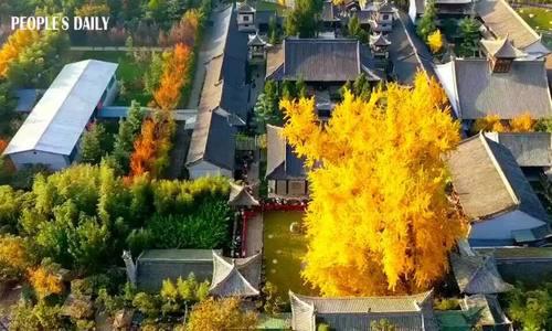 Bí ẩn cây ngân hạnh hơn 1.400 tuổi ở Trung Quốc - Ảnh 3.