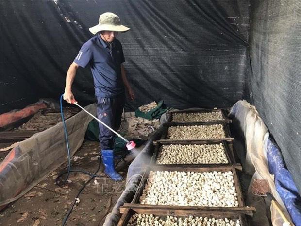 Nuôi loài sợ rét ở ruộng trũng, chả tốn tiền thức ăn, tới mùa đẻ la liệt, một nông dân tỉnh Hải Dương trúng lớn - Ảnh 2.