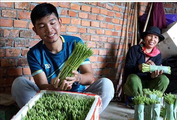 """Quảng Ngãi: Cất bằng kinh doanh quốc tế, trai 9X về làng trồng """"rau vua"""", kiếm nửa tỷ mỗi năm - Ảnh 3."""