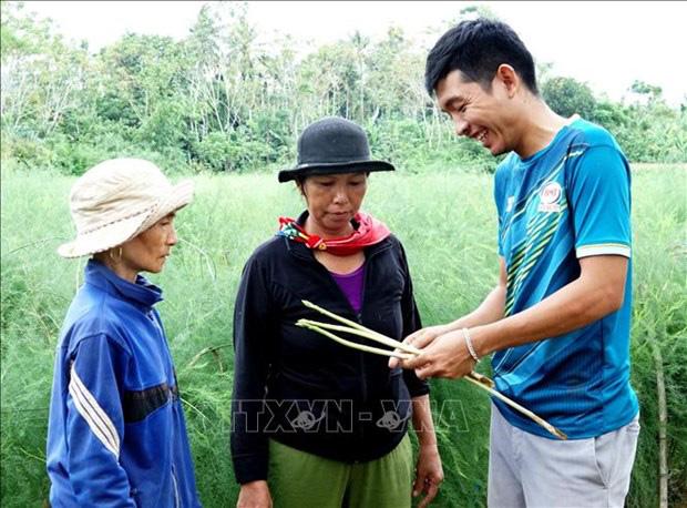 """Quảng Ngãi: Cất bằng kinh doanh quốc tế, trai 9X về làng trồng """"rau vua"""", kiếm nửa tỷ mỗi năm - Ảnh 1."""