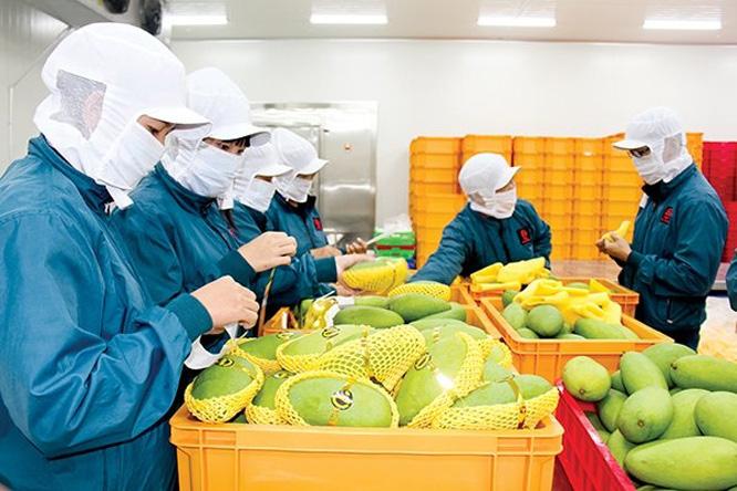 28 nước EU đã nhập gần 1 tỷ USD hàng Việt  - Ảnh 1.
