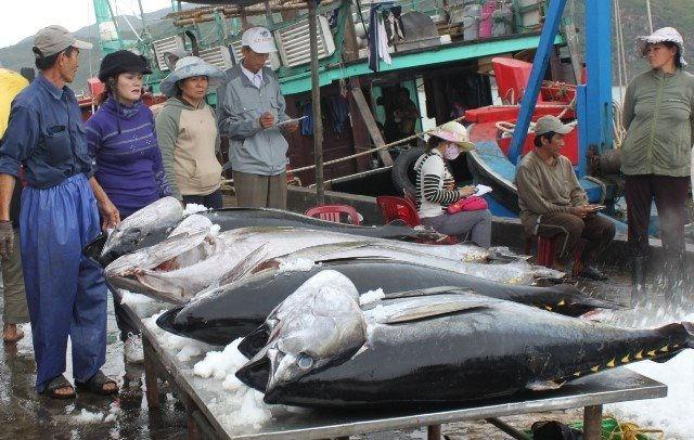 Xuất khẩu cá ngừ sang Italy tăng hơn 8.500% - Ảnh 1.