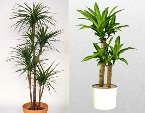 Ai ngờ trồng 6 loại cây này có thể hóa giải phong thủy xấu ở ban công nhà bạn - Ảnh 9.