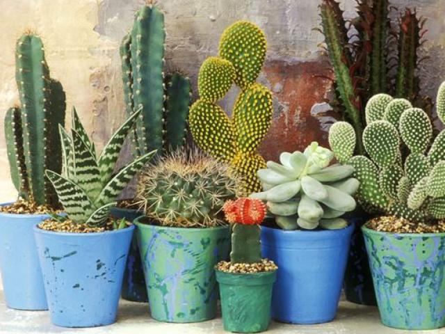 Ai ngờ trồng 6 loại cây này có thể hóa giải phong thủy xấu ở ban công nhà bạn - Ảnh 4.