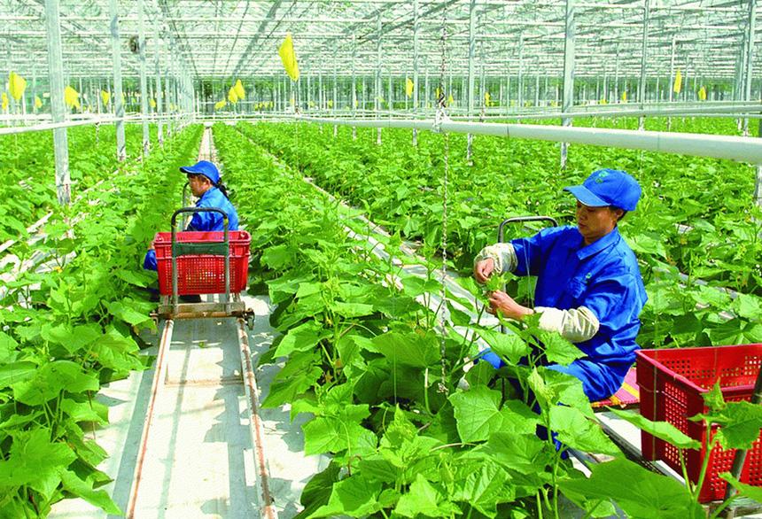 """Chủ tịch VCCI Vũ Tiến Lộc: Sản xuất nông nghiệp nhỏ lẻ, thiếu liên kết đang là """"căn bệnh trầm kha"""" - Ảnh 1."""